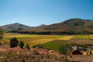 Les huiles essentielles de Madagascar